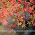 japan2014-01