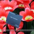 tulip042017 (6)
